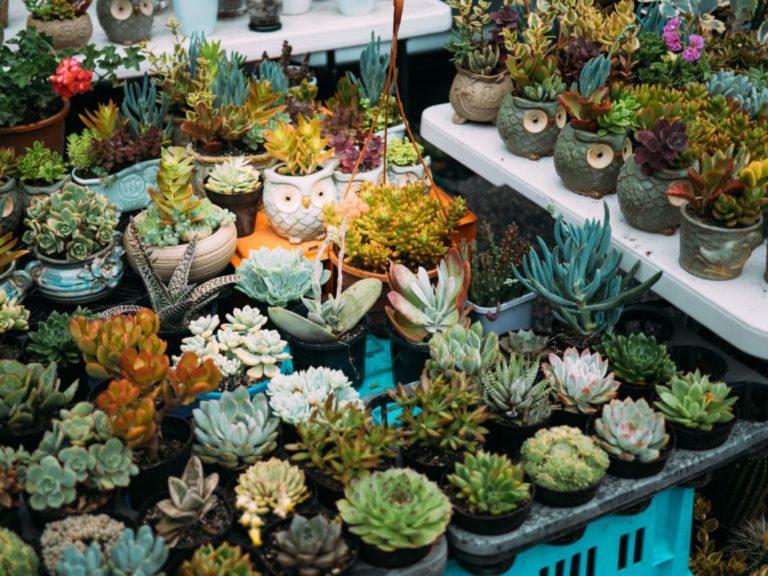 plantes diverses