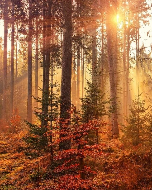 forêt et rayons de soleil